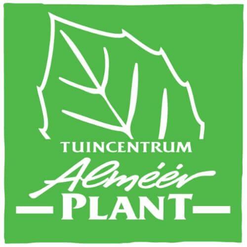 Almeer Plant